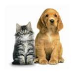 cat-dog-rescue.jpg_megavina_J9W2rVHX.jpg