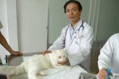 Saigon Pet Clinic Hô-Chi-Minh-ville