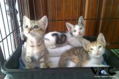 VAC Vietnam Animal Compassion