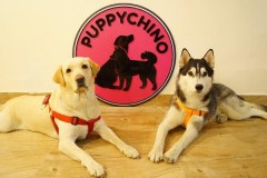 Puppychino first dog cafe