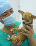 Saigon Pet Clinic