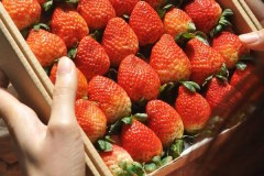 Fruitclub Giao hàng trái cây theo mùa Hà Nội