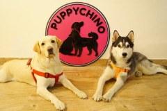 Puppychino quán cà phê dành cho chó đầu tiên